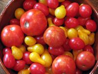 Small_tomato_mix_2