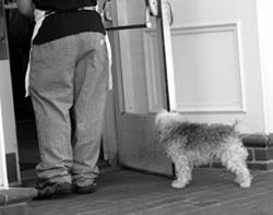 Small_la_madeline_dog_and_server_25