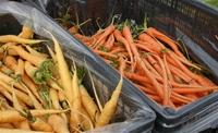 Yellow_and_orange_carrots