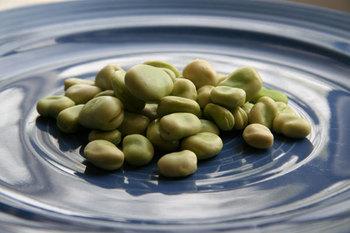 Fava_beans_in_shells